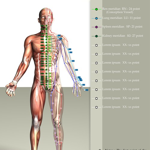 Human body & acupuncture meridians