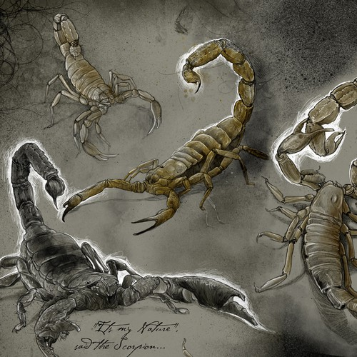 Scorpion illustrations