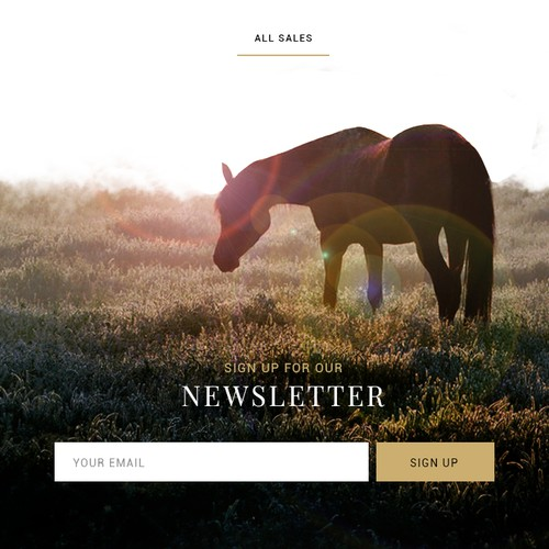 Web design for a horse breeding farm