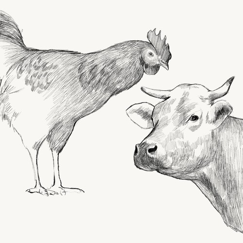 draw for label design bone broth