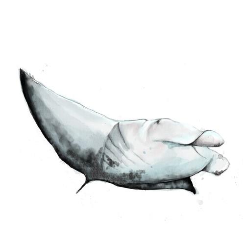 watercolor manta