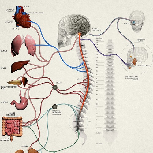 Spine and Nerve Chart Illustration for Patient Education.