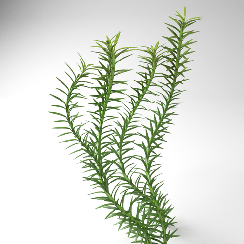 Plant in 3D Visual