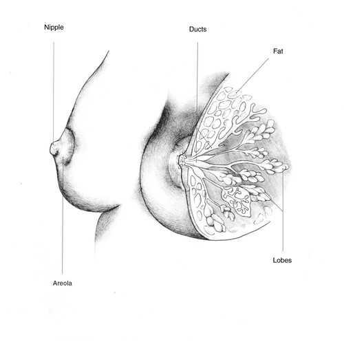 Gynecology illustrations for lay peoplee