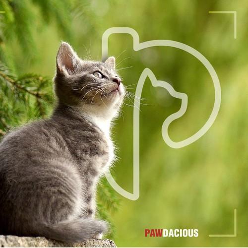Pawdacious icon