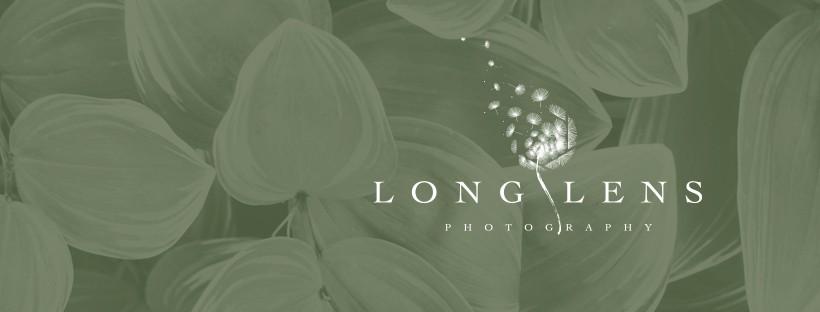 Help! I need a clean sophisticated logo for my photography business