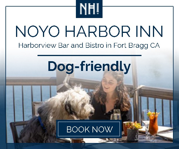 Banners for dog-friendly hotel and restaurant