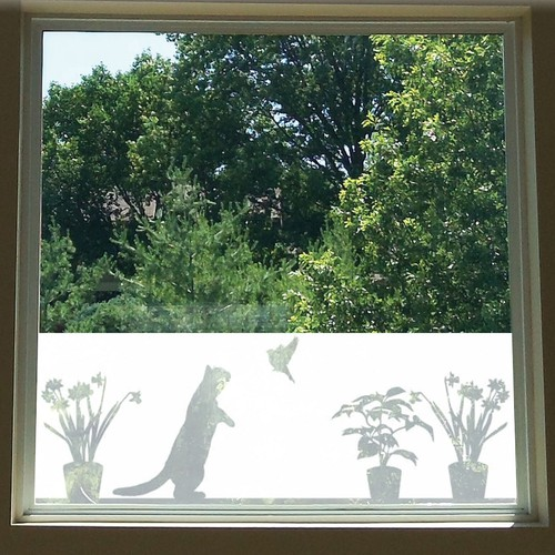 Window Film Design - Cat and Bird