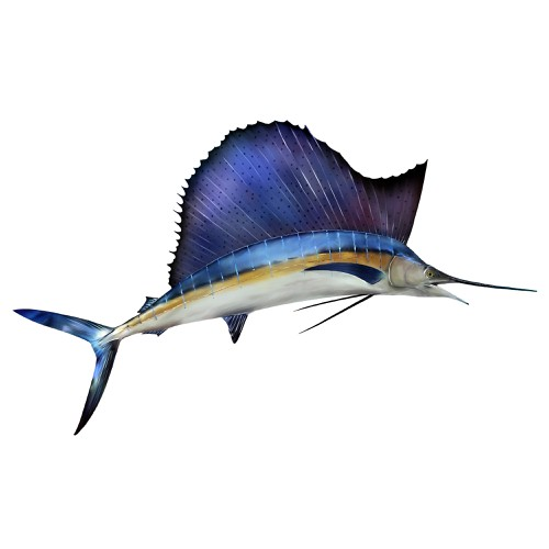 Sailfish Graphic for Fishing tournament brochure - must be original