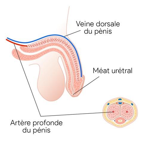 Medical diagram for doctor