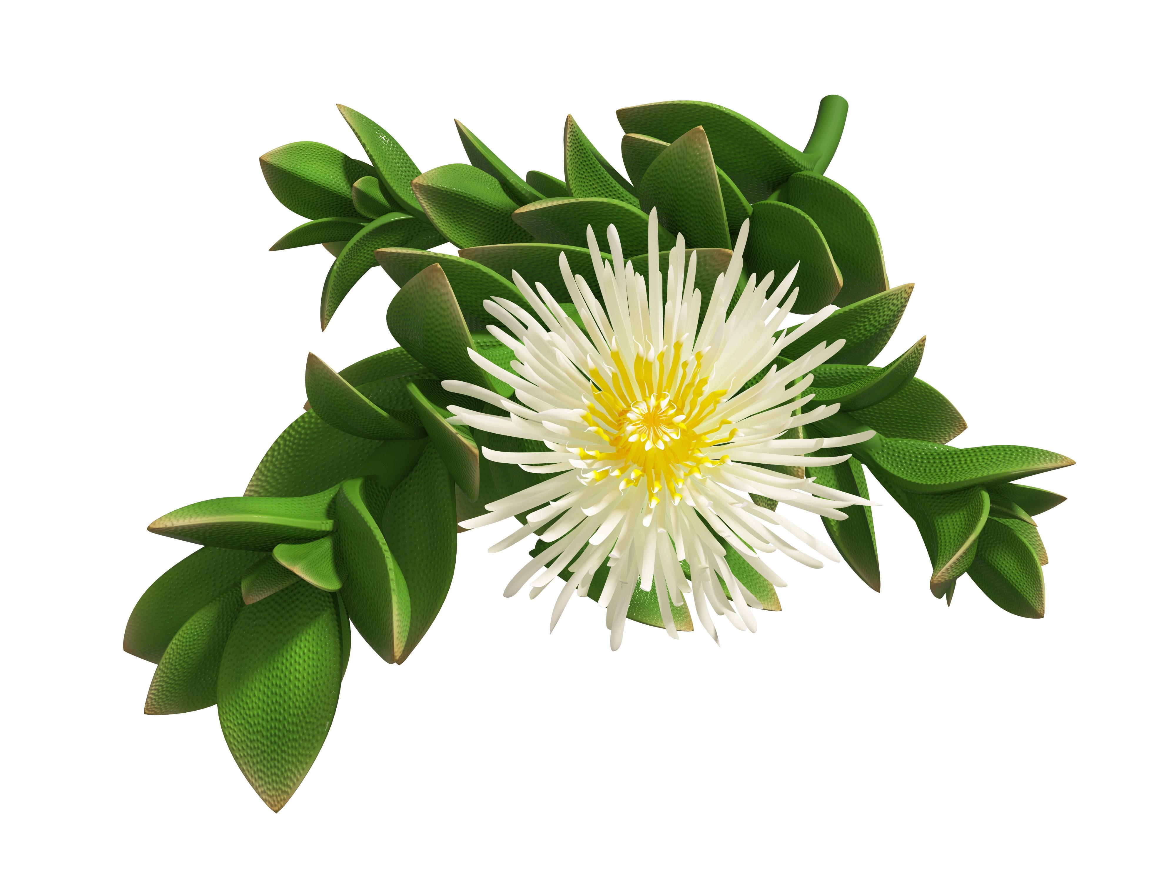Create a Kanna plant image