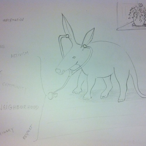 Aardvark - very interesting mammal