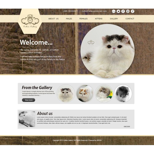 cotton cattery website