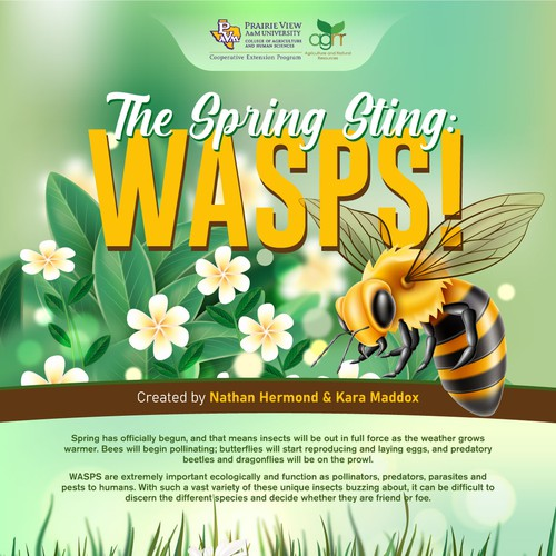 Wasps Guide Infographic