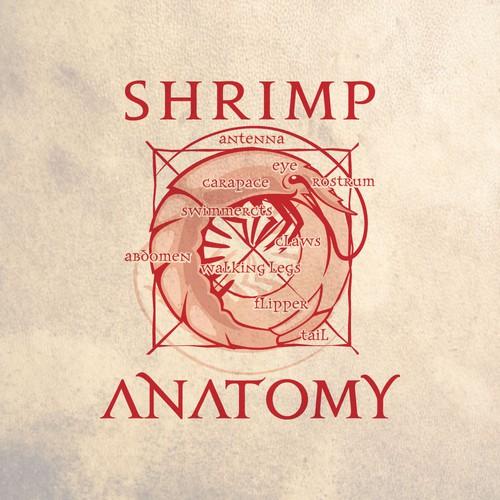shrimp anatomy