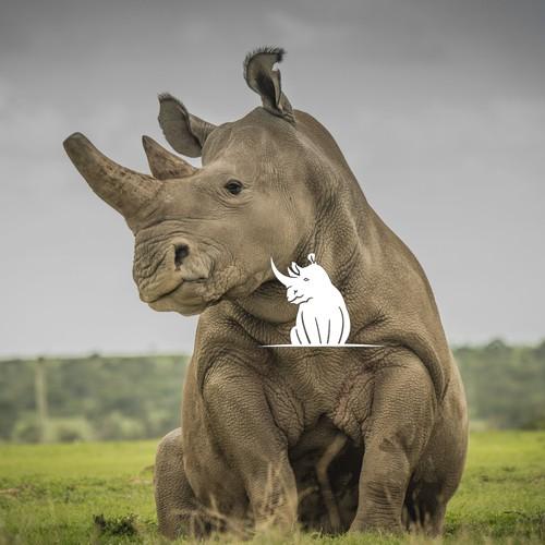 Rhino logo for software company