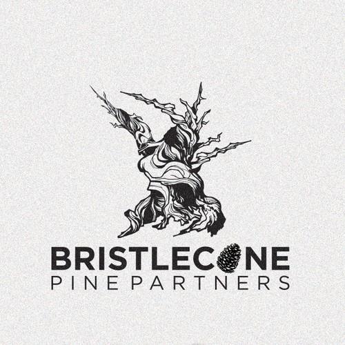 Bristlecone Pine Tree Logo