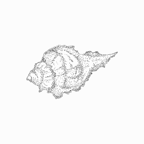 Stipple image of Cantharus Shell