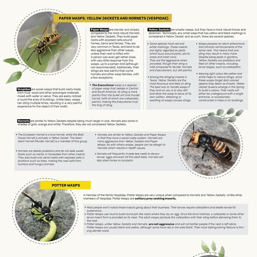 Infographic about wasps