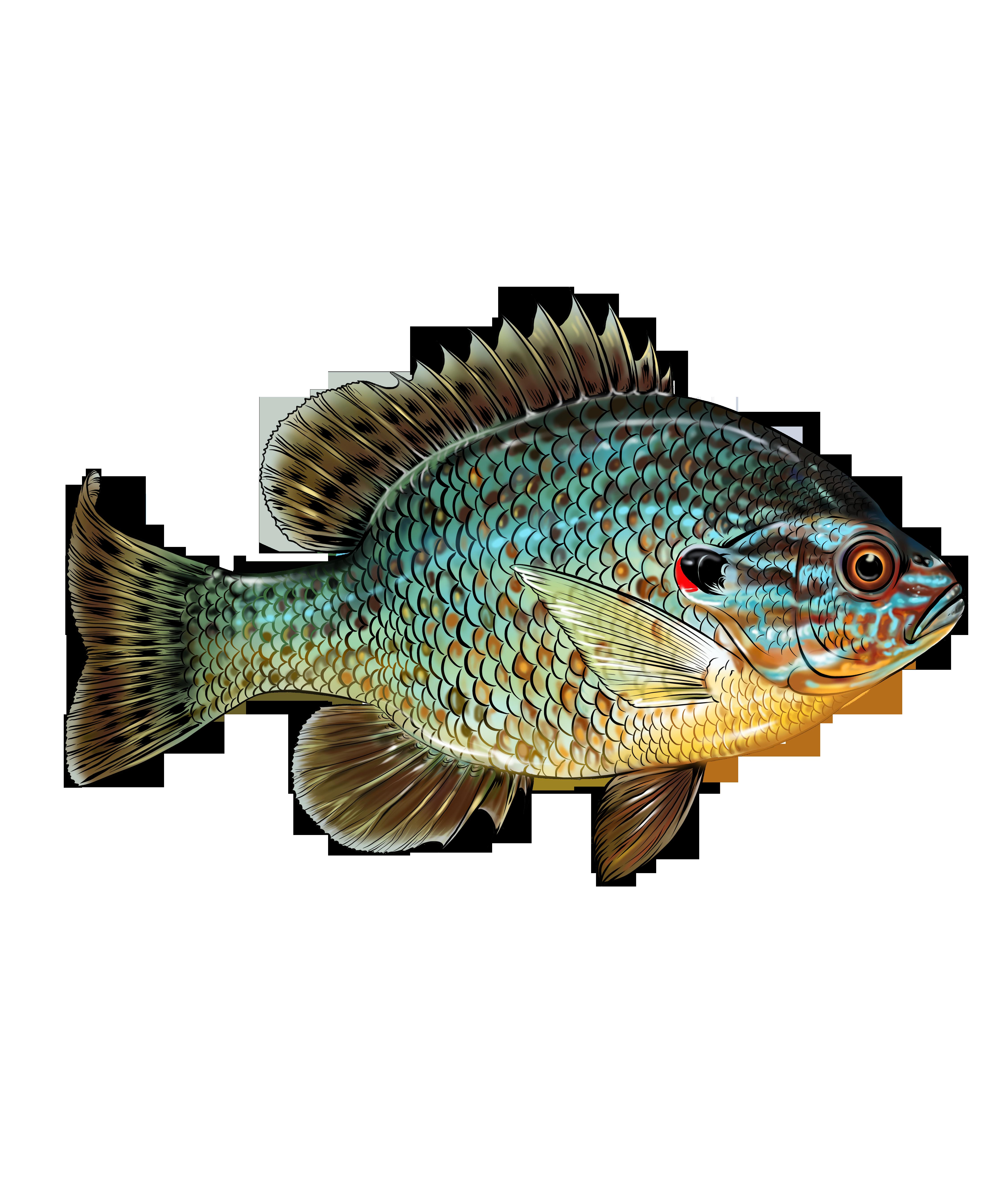 Pumpkinseed Fish Design