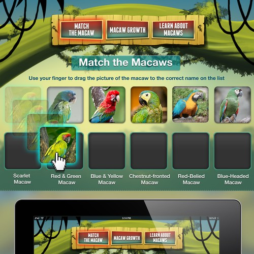 Macaws! A Simple Educational Game App About Macaws In The AmazonRainforest