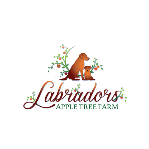 Labradors Apple tree farm