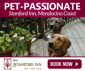 Banner ads for stanford inn