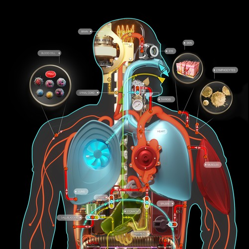 Metabolic human scheme