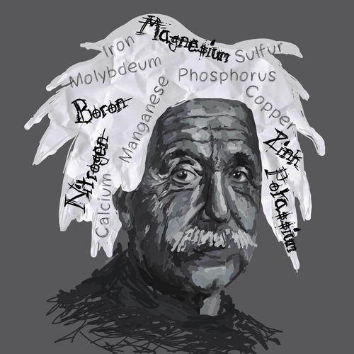"Create a Einstein Nutrient Illustration for our ""Are You Deficient?"" game"