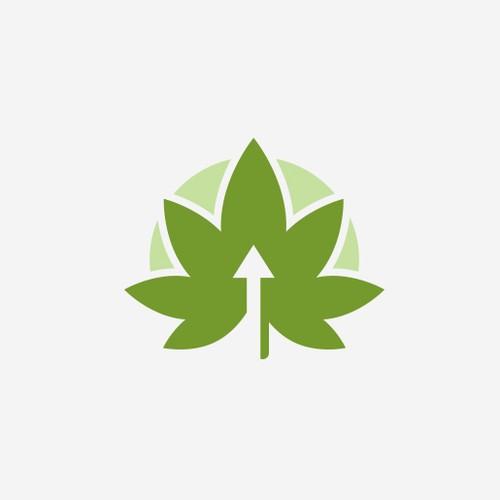 Cannabis - Arrow