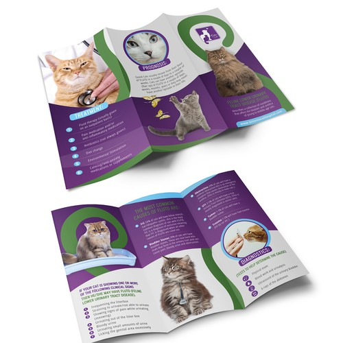 Brochure  - Kitten to Cats Hospital