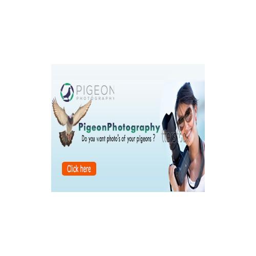 Banner-design for PigeonPhotography