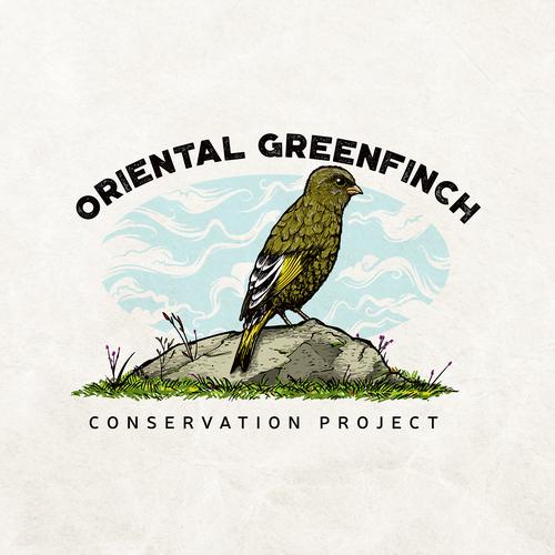 Oriental Greenfinch