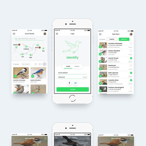 Custom bird-watching app