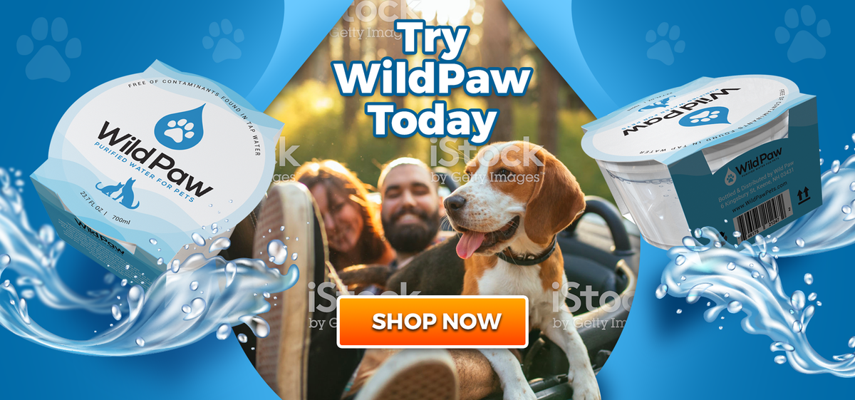 Design a header hero image for pet themed store