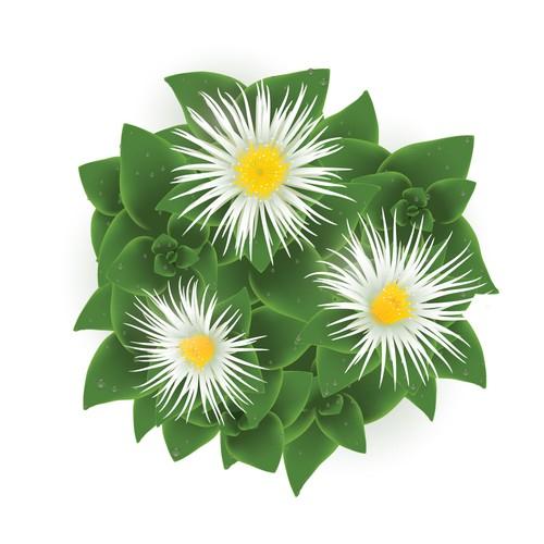 Kanna Plant