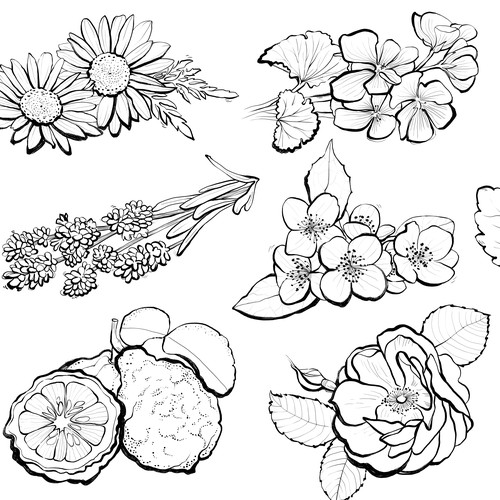 Ingredient illustration
