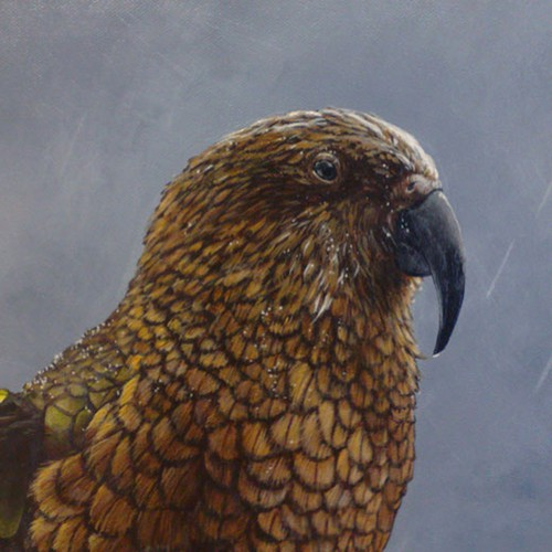 Small painting of a Kea (parrot).