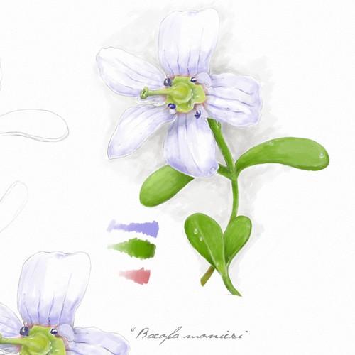 Botanical illustration for medicine