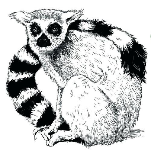 Realistic Animal illustrations