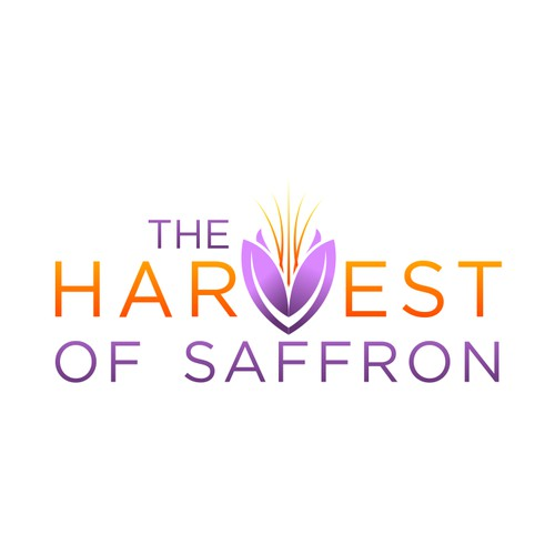 THE HARVEST OF SAFFRON