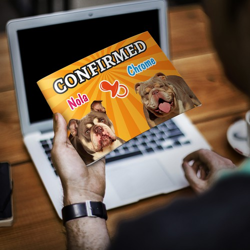 Announce English Bulldogs Pregnancy