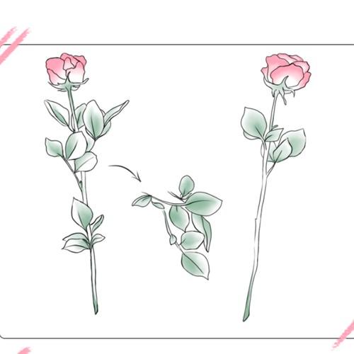 Flower care guide