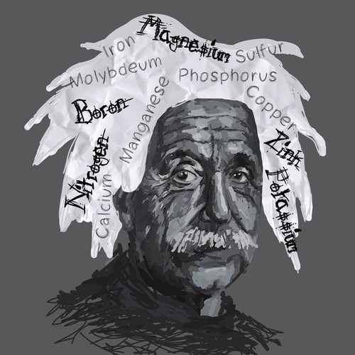 """Create a Einstein Nutrient Illustration for our """"Are You Deficient?"""" game"""
