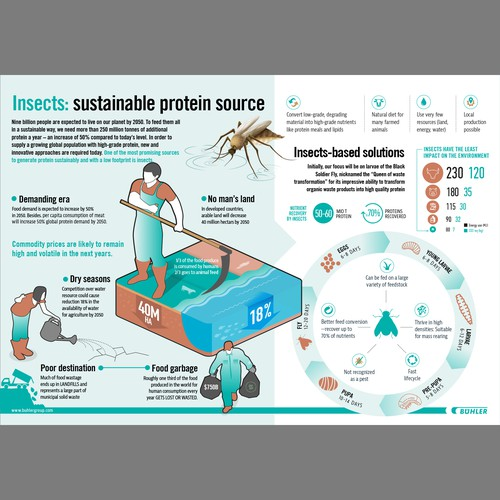 Insects infographic