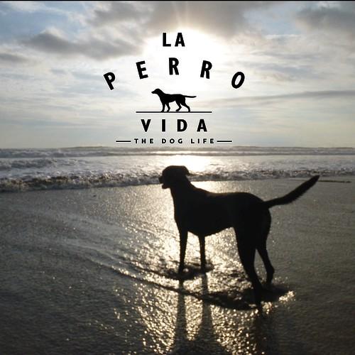 Modern, clean logo for new dog rescue fundraising e-commerce brand.
