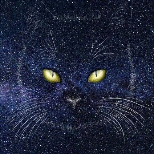 Drawing space cat
