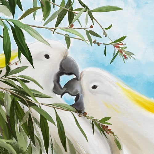 Australian Wild Life birds