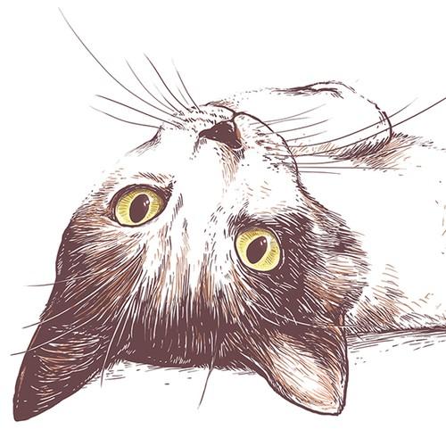The best cat t-shirt ever