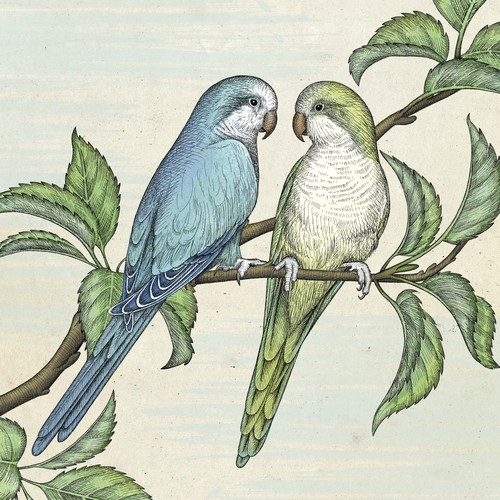 Full color version of memorial illustration for parrot couple Pluto & Merlin.
